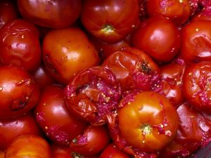 Dangers of Using Rotten Tomatoes To Cook Stew