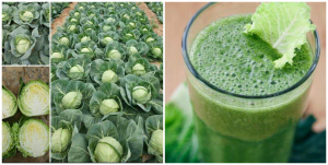 Health Benefits and Side Effects of Cabbage: Pros and Cons of cabbage