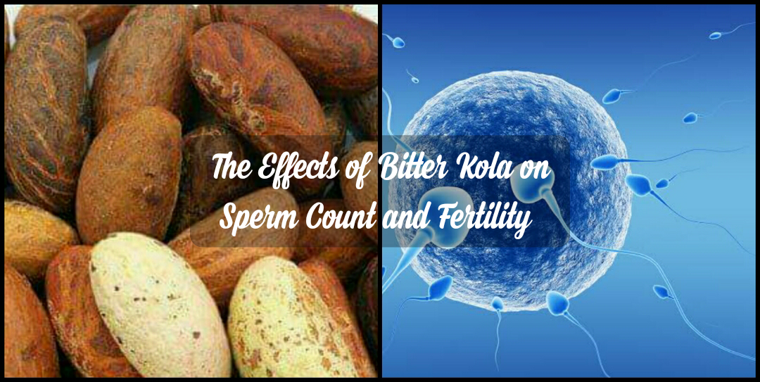 What is the (side) effect of bitter kola on sperm count and fertility