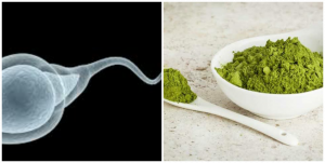 can moringa cure watery sperm?
