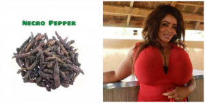 How to use uda seed for breast enlargement